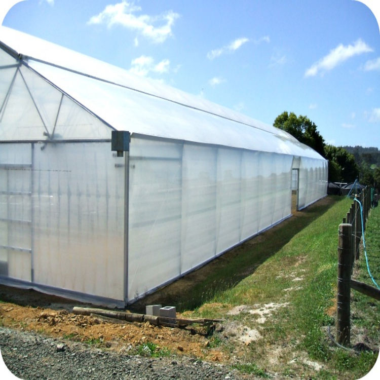 Plastic Pe Film Greenhouse Hot Sale For Agriculture/ Farming