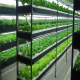 Hydroponic and Aquaponic system for plant factory
