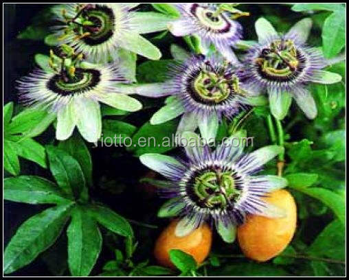 Passionflower p.e. Passiflora Incarnata l.Extract CAS No.: 574-12-9