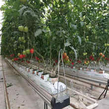 Agriculture double tunnel plastic film tomato greenhouse with Soilless cultivation system