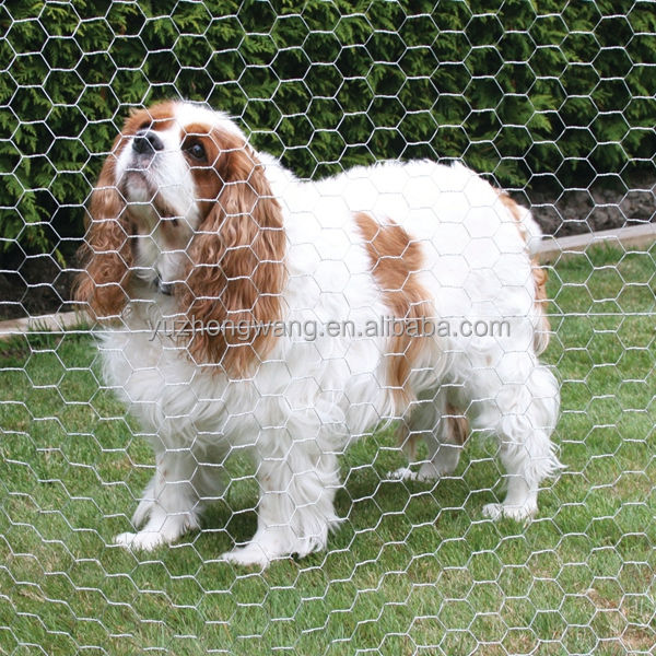 "6FT 2"" Opening Hot Dipped Galvanized Hex Netting Chicken Wire Fence for Rabbit Fence (Anping factory, 22 years )"