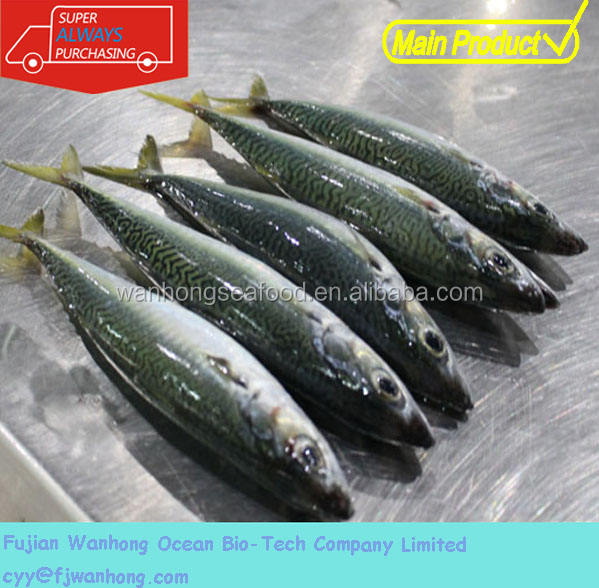 china seafood whole part pacific mackerel fresh frozen fish