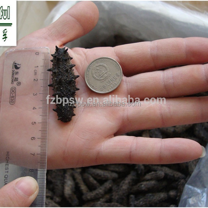 Taiwan Strait best price of different sizes prickly/ spiky dried sea cucumber,trapang
