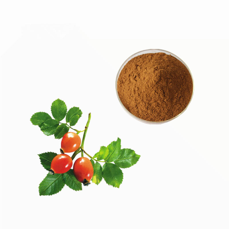 (High) 저 (Quality Rich Vitamin C Rose Hip 추출물 분말