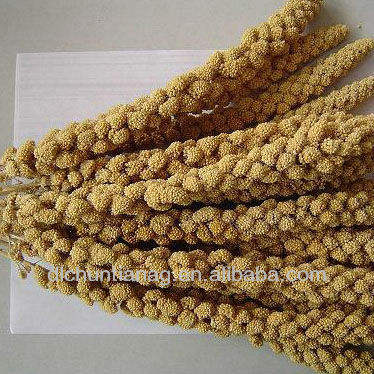 organic yellow/red millet spray