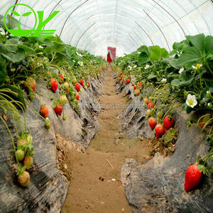 New design Vegetable Fruits Flowers green house High Quality Tunnel Greenhouses