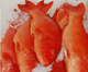 Hot sale frozen red grouper fish