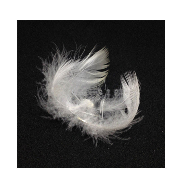 Professional manufacture washed duck feathers