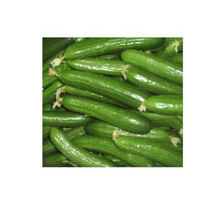 fresh Egyptian green cucumber for sale