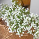 Petals Feel and Look like Fresh Babysbreath Floral Artificial Flower Bouquet Floral Arrangement
