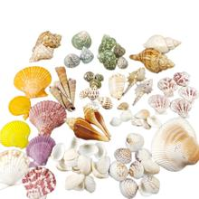 Wholesale DIY Beach Decoration Natural Mixed Sea shells