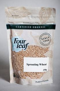 Sprouting Wheat