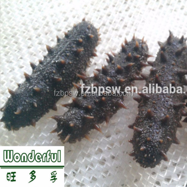 All Natural Seafood Black Teat Sea Cucumber