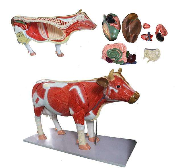 Animal Acupuncture Model, Dog Cat Horse Cow Animal skeleton Anatomy Model