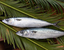 Best Quality Chinese Mackerel Whole Round Mackerel Fish For Sales