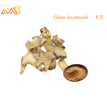 Free Sample Herbal Giant knotweed extract / Giant Knotweed Root p.e. /Polygonum Cuspidatum Extract/Resveratrol