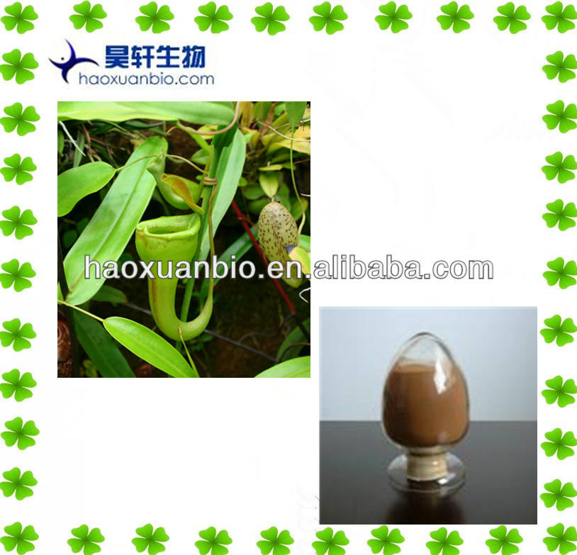Snake Gourd Root Extract Powder