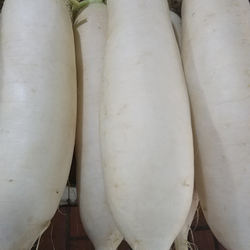 Chinese supplier Chongqing fresh big white radish green vegetable ecological planting