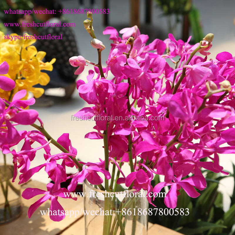 Best Wholesale Companies Cheap Phalaenopsis Orchids With Low Price And Fast Shipping From Kunming