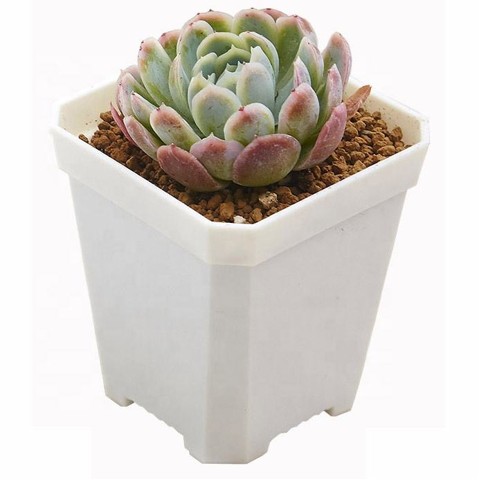 Colorful Square Plastic Flower Pot With Plate For Home & Garden