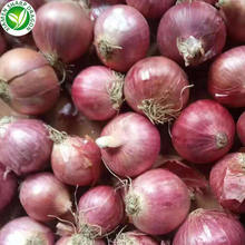 Export chinese onion fresh red shallot with best prices
