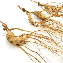 Chinese famous and healthy wild ginseng about 25 years old from Changbai Mountain, Jilin