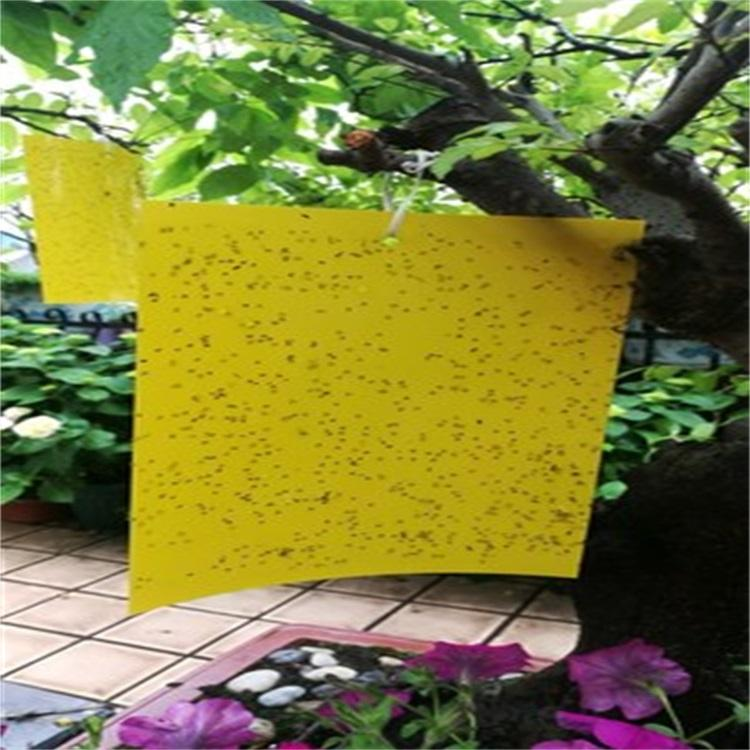 SP-UV light yellow sticky insect traps glue boards