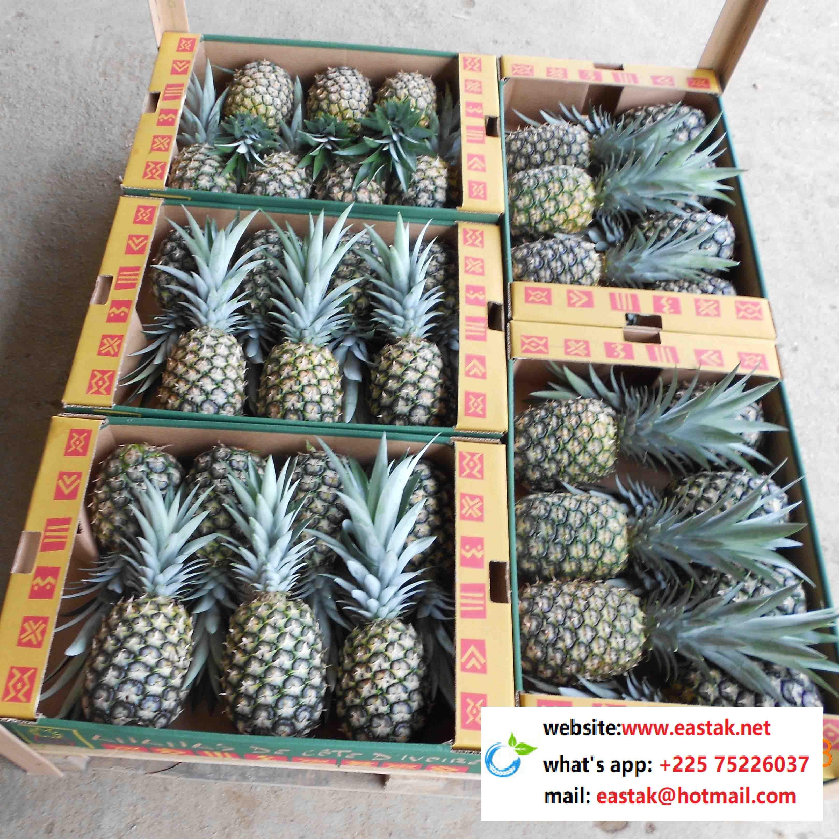 Low price organice pineapple from Africa- what's app:0022575226037