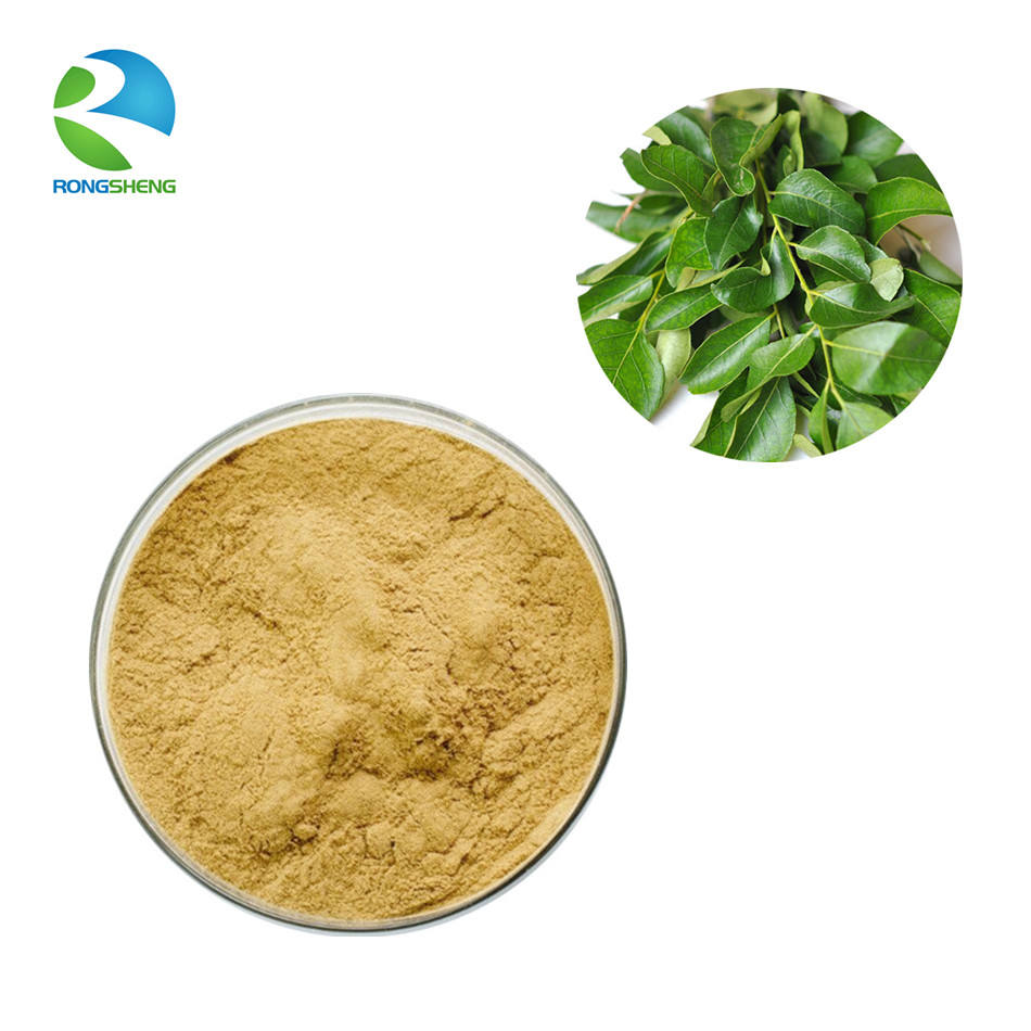 Best selling high quantity fresh curry leaf extract