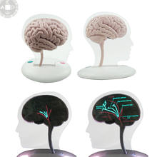 medical gifts promotion product teaching brain LED