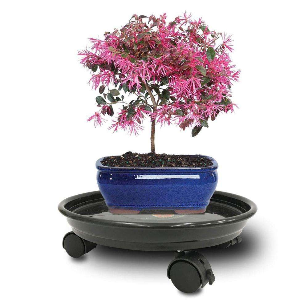 plant caddy with wheels plant coasters on wheels plant dolly