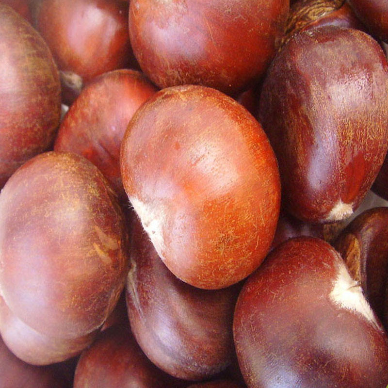 2020 new crop fresh chestnut