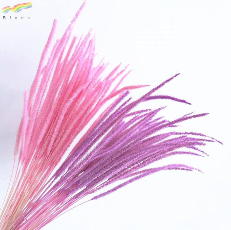 Hot sale fresh dried decorative pampas grass spindly plants color