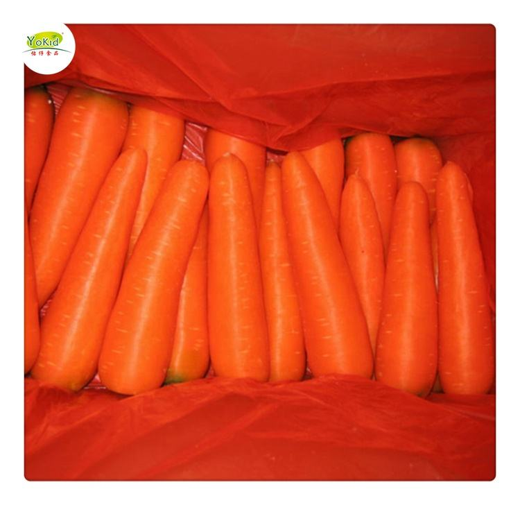 Fresh Wholesale Chinese Yellow Carrots