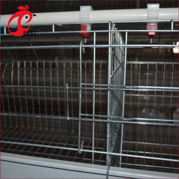 Professional 4 tiers battery cages laying hens sell in algeria with great price