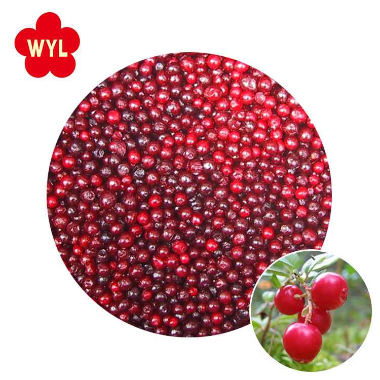 Wholesale fresh IQF whole frozen red lingonberry cranberry