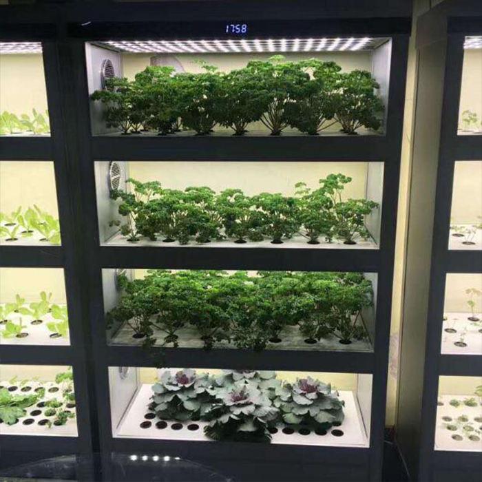 Купить гидропоники семена медведи поле марихуаны