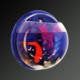 Best price mini half sphere shape wall mounted acrylic aquarium