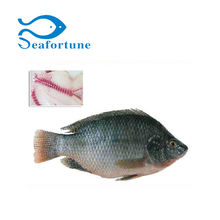 Wholesale gutted & scaled whole round ggs frozen tilapia