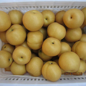 fresh golden delicious singo pear factory