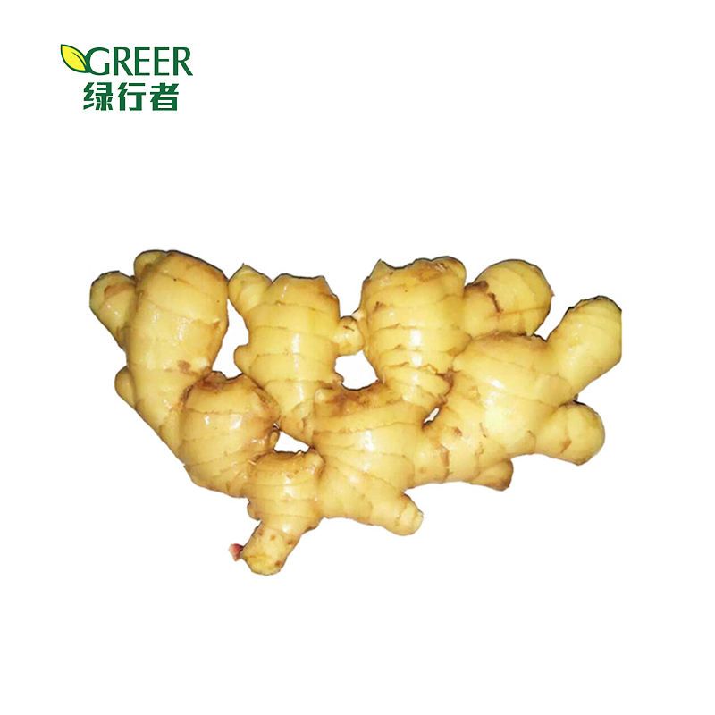 Reliable quality fresh ginger