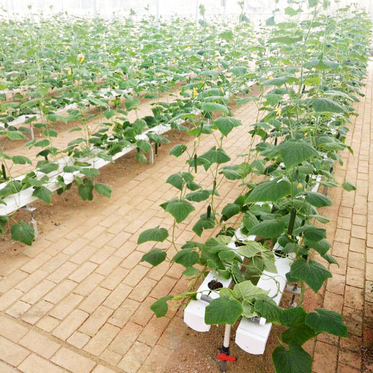 EC, pH, Fertilizer hydroponic controllers for vegetable food production and agriculture