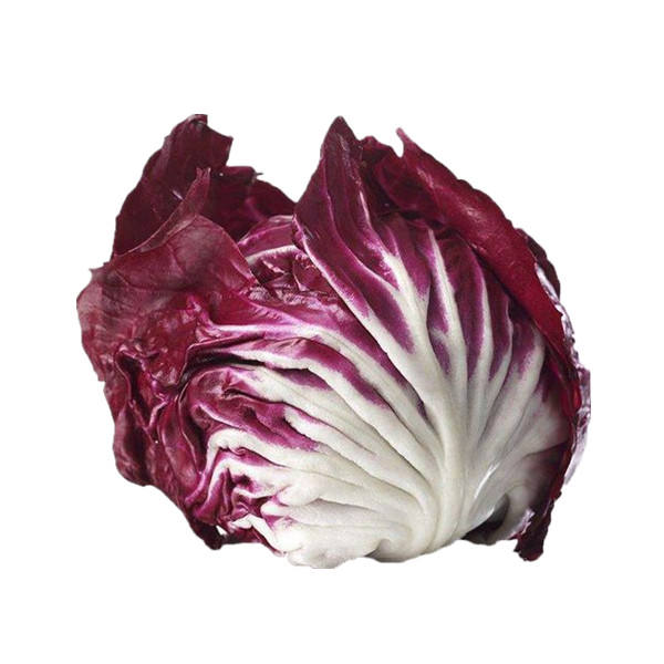 2020 Organic Vegetable Seeds Red Chicory Seeds For Planting
