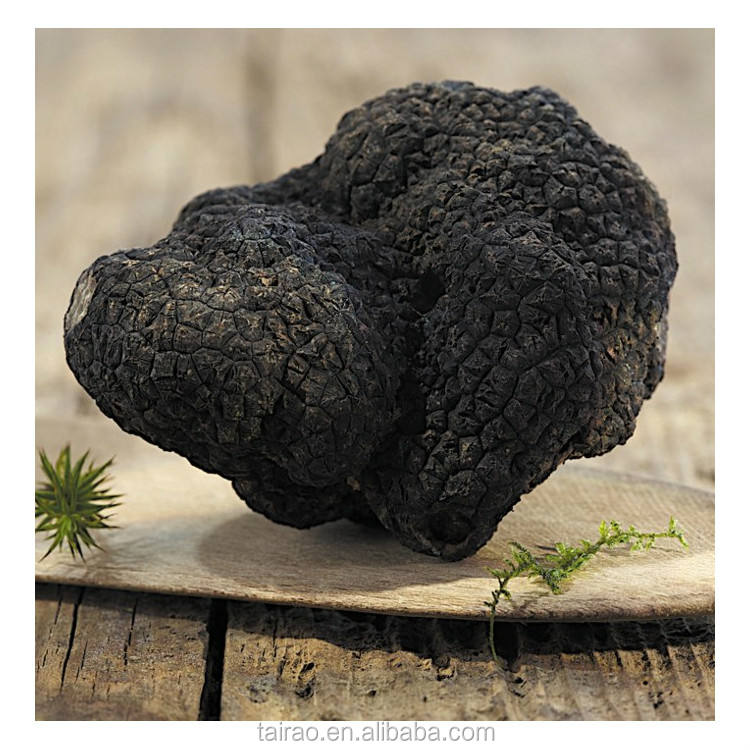 Tuber magnatum truffle grow in chinese truffle hot sale truffle