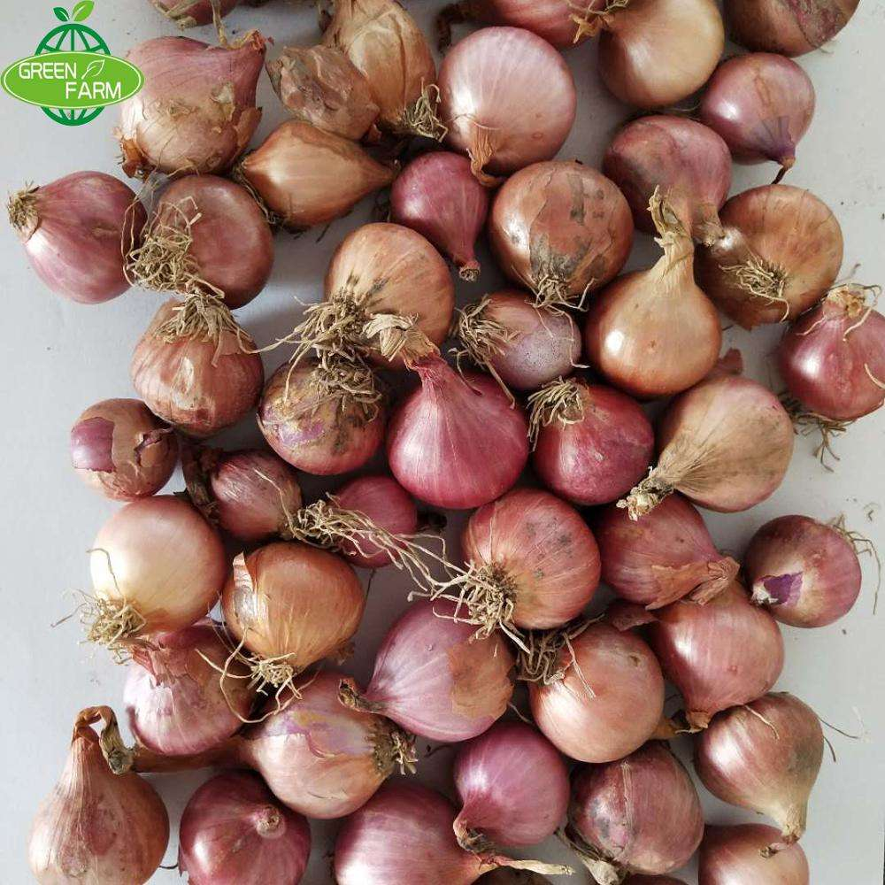 sell lots of quality small red onions at low prices,2-3cm