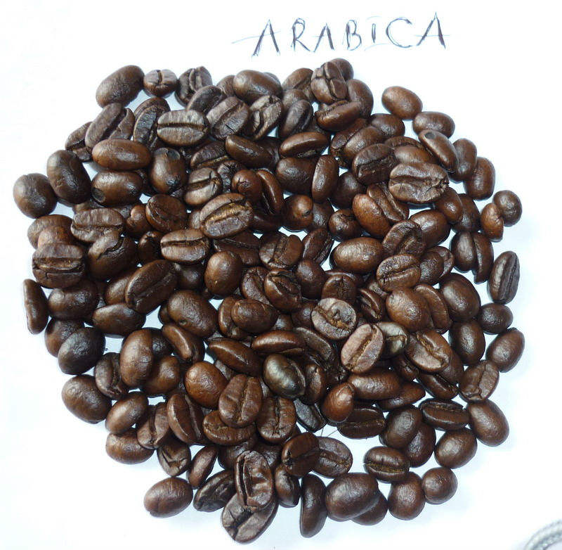 ARROSTO CHICCHI di <span class=keywords><strong>CAFFÈ</strong></span> <span class=keywords><strong>ARABICA</strong></span>