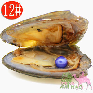 Wholesale vacuum packed natural freshwater triangular oysters with 7-8mm #12 color round pearls (free shipping)