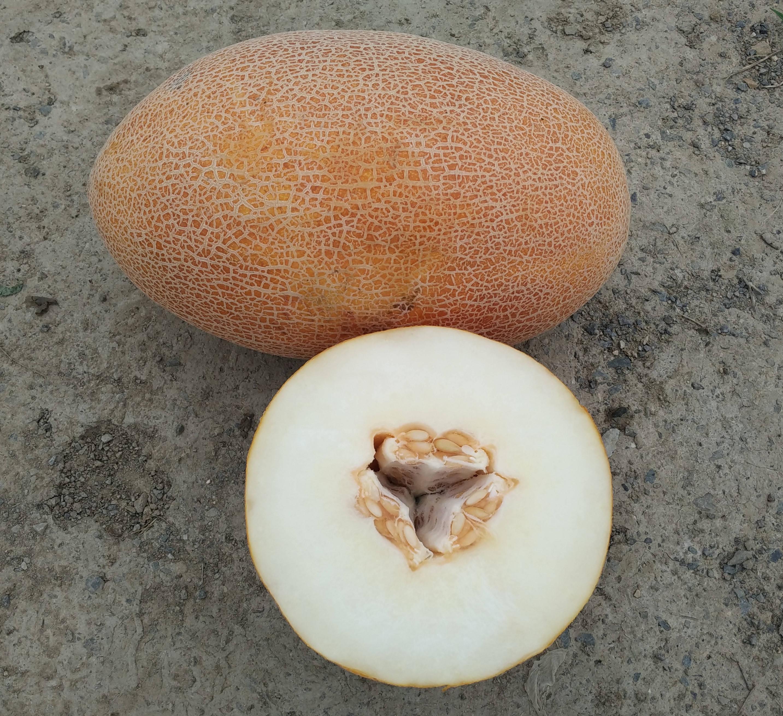 Ananas de oro vegetales híbrido F1 blanco semillas de melón
