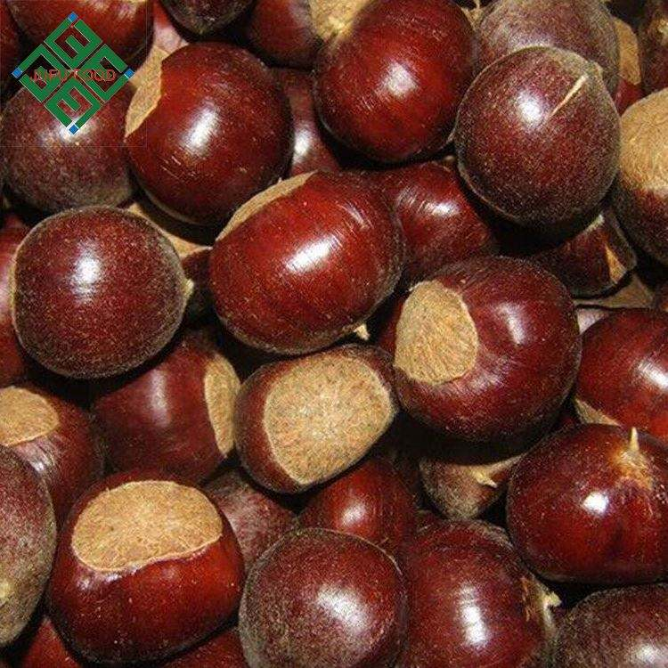 chinese chestnut wholesale price fresh chestnut in shell