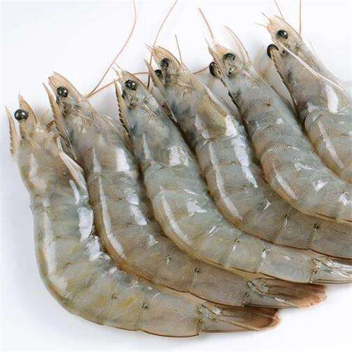 delicious frozen shrimp with better price